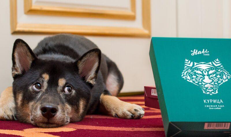 Дизайн упаковки бренда премиальных кормов для домашних животных Hati Food. Разработка логотипа и брендинг.